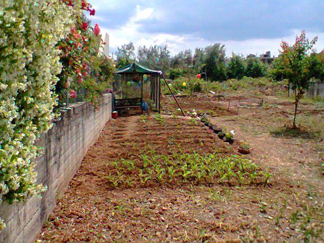 Κατηγορία: Κήποι - Ερμιόνη