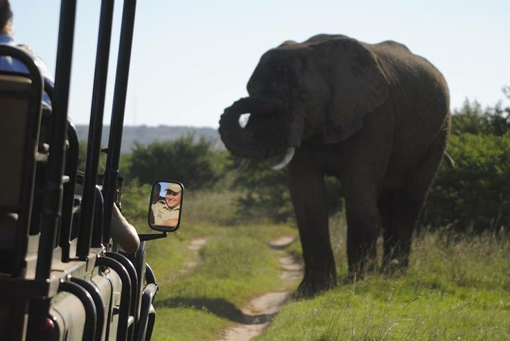 Experience wildlife as it is meant to be experienced - in the wild!