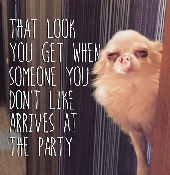 Funny dog meme: That look you get when someone you don't like arrives at the party