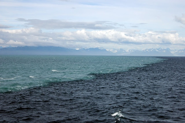 Where the Sea Gulf of Alaska meets the water of the glaciers (and do not mix). It's amazing!
