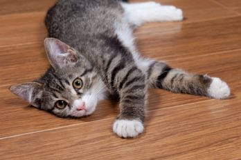 Getting a new kitten? Learn how to 'kitten proof' your home in these 7 easy ways.