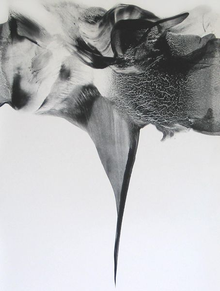 Patti Jordan | Needler - Corpus 009 [2010, ink & graphite on paper] | http://www.pattijordan.com/