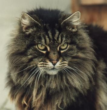 Copyright 2002-2013, Sarah Hartwell -Learn more about how to care for cats at catsincare.com!
