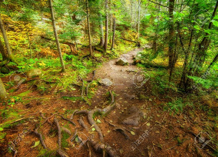 36570339-A-high-angle-shot-of-a-descending-path-in-a-forest-during-the-autumn-season--Stock-Photo.jpg (1300×939)