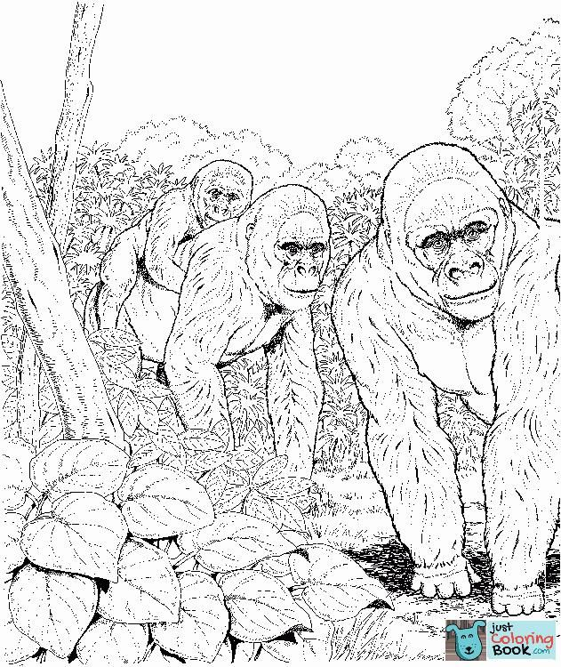 Three Gorillas In Forest Coloring Page Free Printable Coloring Pages Intended For Free Download Printable Gorilla In Jungle Coloring Pages