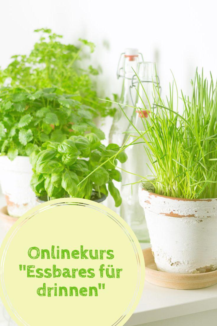 Mein Onlinekurs Essbares Für Drinnen Küchen Kräuter Basilikum
