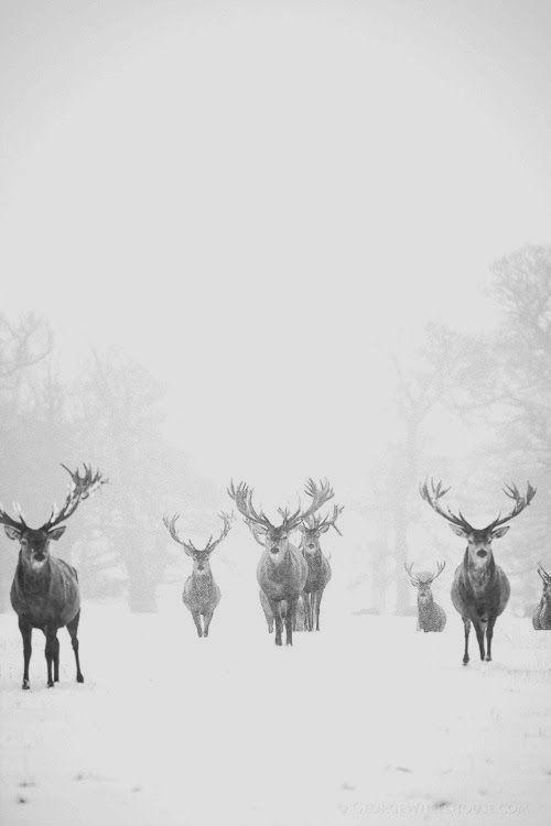 Cerfs wild forêt