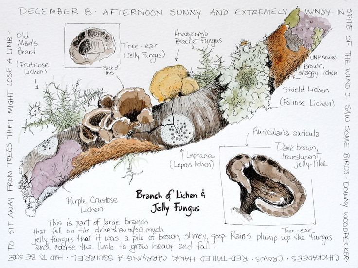 journal piece of writing with regards to fungi