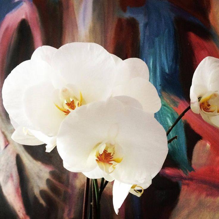 Maanantain iloja, orkidea kukkii!