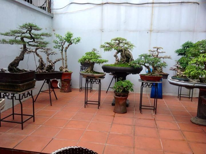 17 Best Images About Bonsai Display Ideas On Pinterest
