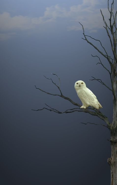 Owl:  if you see one in the day time, it is suppose to mean that wise spirits are protecting you.