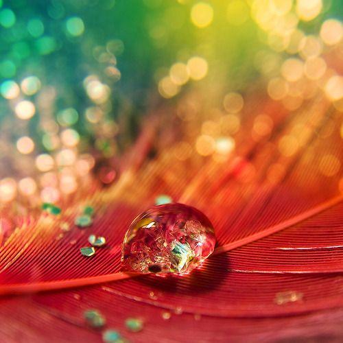 : Peacock Feathers, Waterdrop, Rainbows Colors, Colors Photography, Dew Drop, Raindrop, Dewdrop, Water Droplets, Rain Drop
