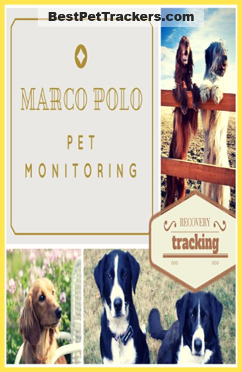 Click http://bestpettrackers.com/marco-polo-pet-monitoring-locating-system-review/. Are you thinking of buying the Marco Polo Pet Tracker?. First read my in depth review where I reveal what users love about it and what they don't. Get the latest info & the best price at http://BestPetTrackers.com.