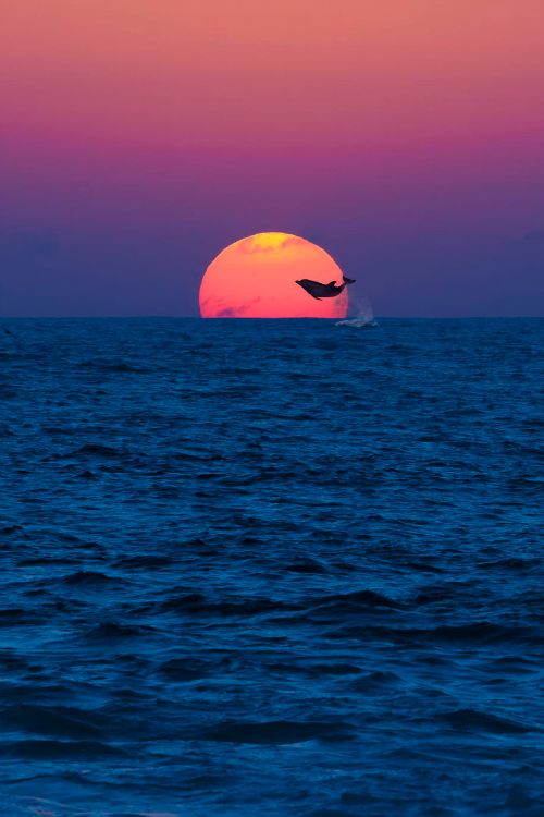 Sunset with a dolphin..