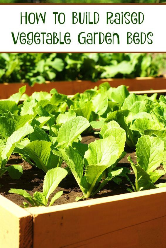How to Build Raised Vegetable Garden Beds. 5243 best images about   Gardening Ideas  Tips   Tricks   on
