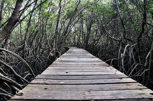decaying wooden walkway of Mangrove Information Center. Photo by Raditya Margi.