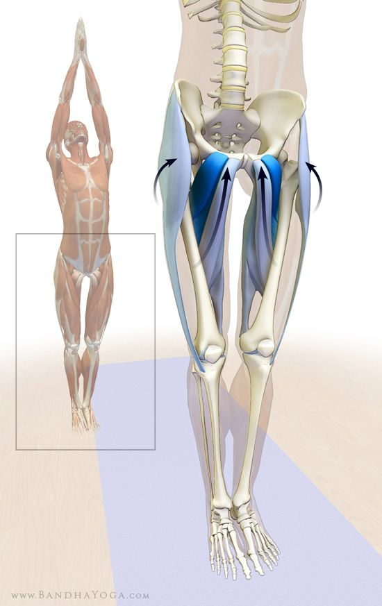 Using the Adductor Muscles in Dog Pose, Tadasana and Urdhva Hastasana