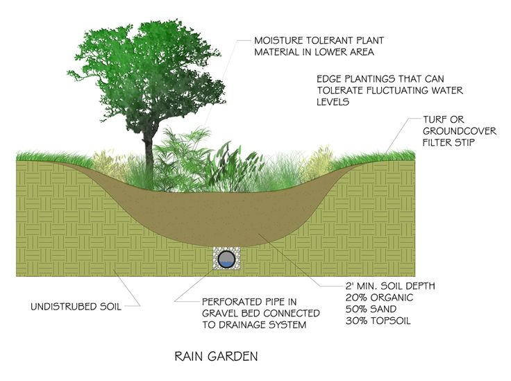 The 164 best images about Rain Gardens on Pinterest Gardens