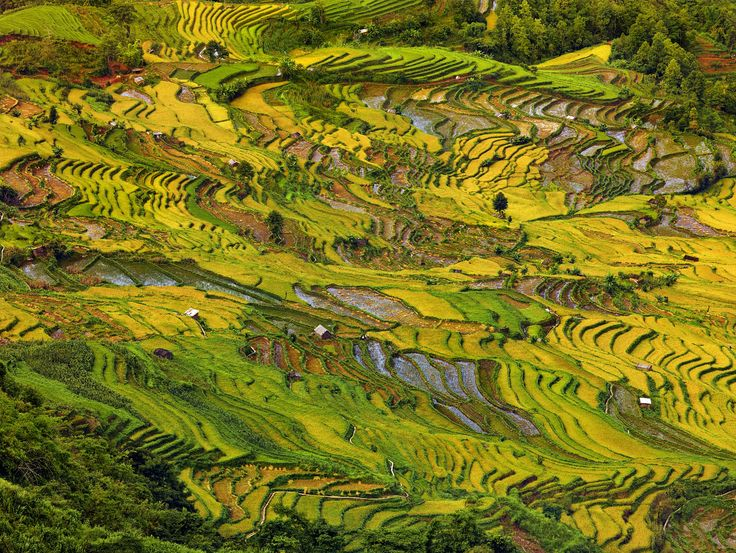 Harvest in Yuanyang by Thierry Bornier on 500px