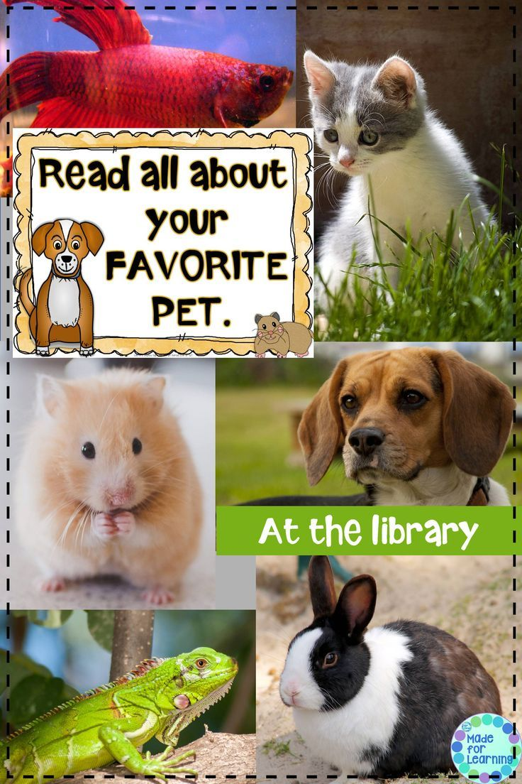 Create a display of favorite pet books in your library or classroom.  Signs for many different pets included in set.  $