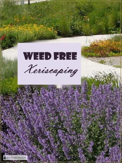Weed Free Xeriscaping - a clean, dry garden... Gardening | Xeriscaping