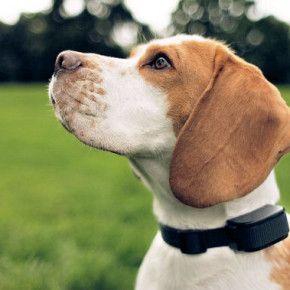 Il collare antiabbaio è un dispositivo che si attiva attraverso le vibrazioni del cane provocate nel momento in cui abbaia. Ne esistono di tre tipi: quello elettrico, che provoca una scossa elettrica, quello ad ultrasuoni, che emette ultrasuoni a forte intensità, e quello che nebulizza acqua, citronella, lavanda o altre sostanze odorose.