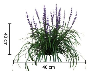 AMETHYST™ Liriope is a compact plant with deep purple flowers | Foliage First Range