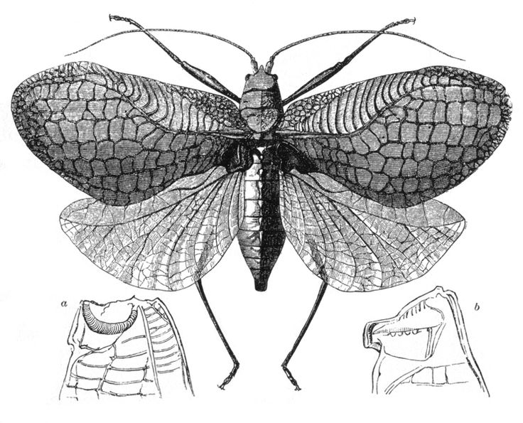 flying insect diagram as a tattoo nature patterns. Black Bedroom Furniture Sets. Home Design Ideas