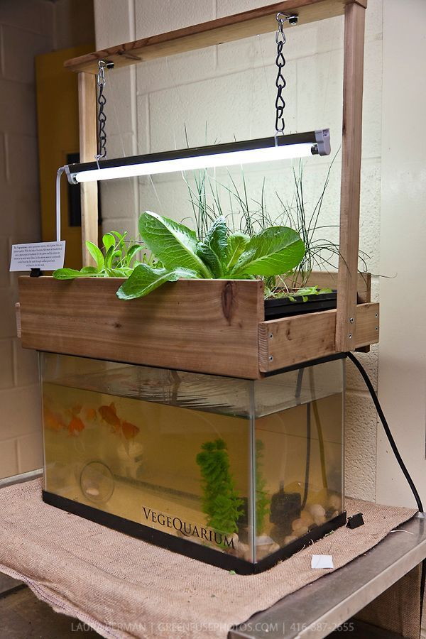 Vegequarium a compact indoor aquaponics system with plants and fish in a closed loop.