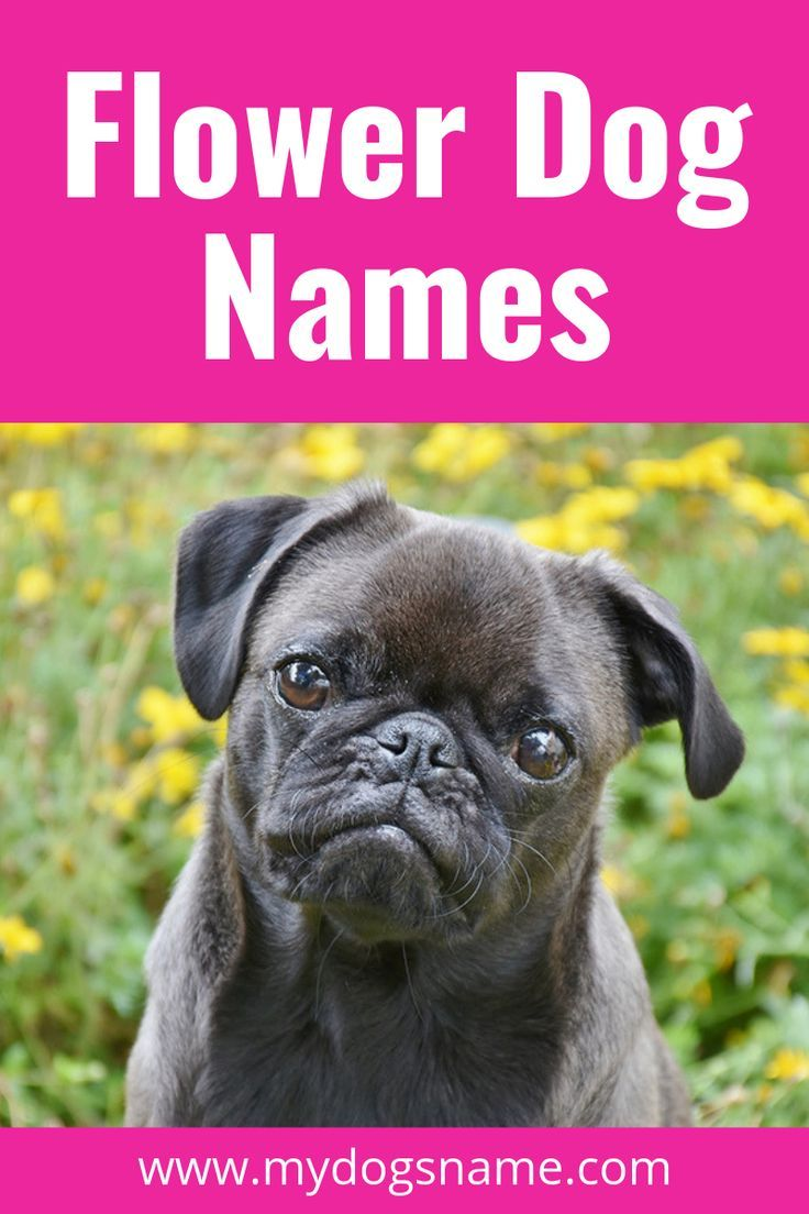 Flower Names For Dogs My Dog S Name Dog Names Girl Dog Names Girl And Dog