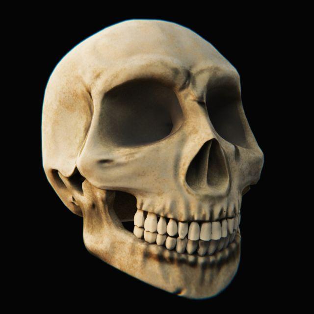 Skull - Blender3D 3D Model .max .c4d .obj .3ds .fbx .lwo .stl @3DExport.com by topwater.digital