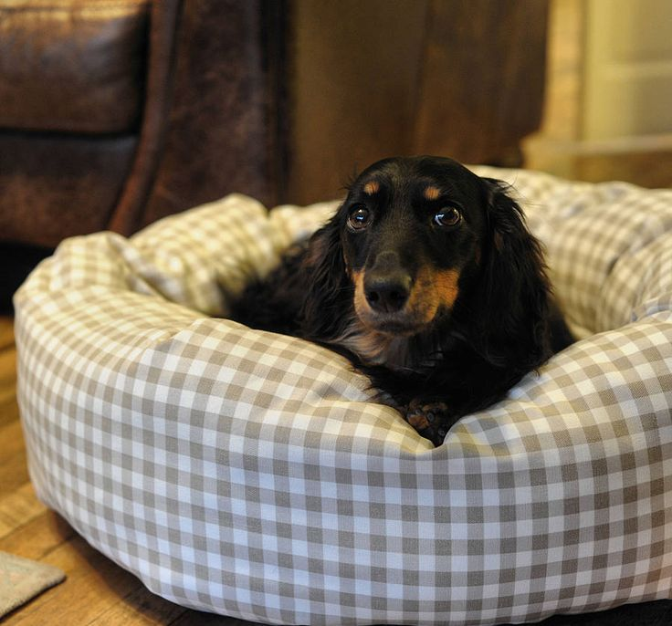 17 Best Images About For My Mini Dachshund On Pinterest