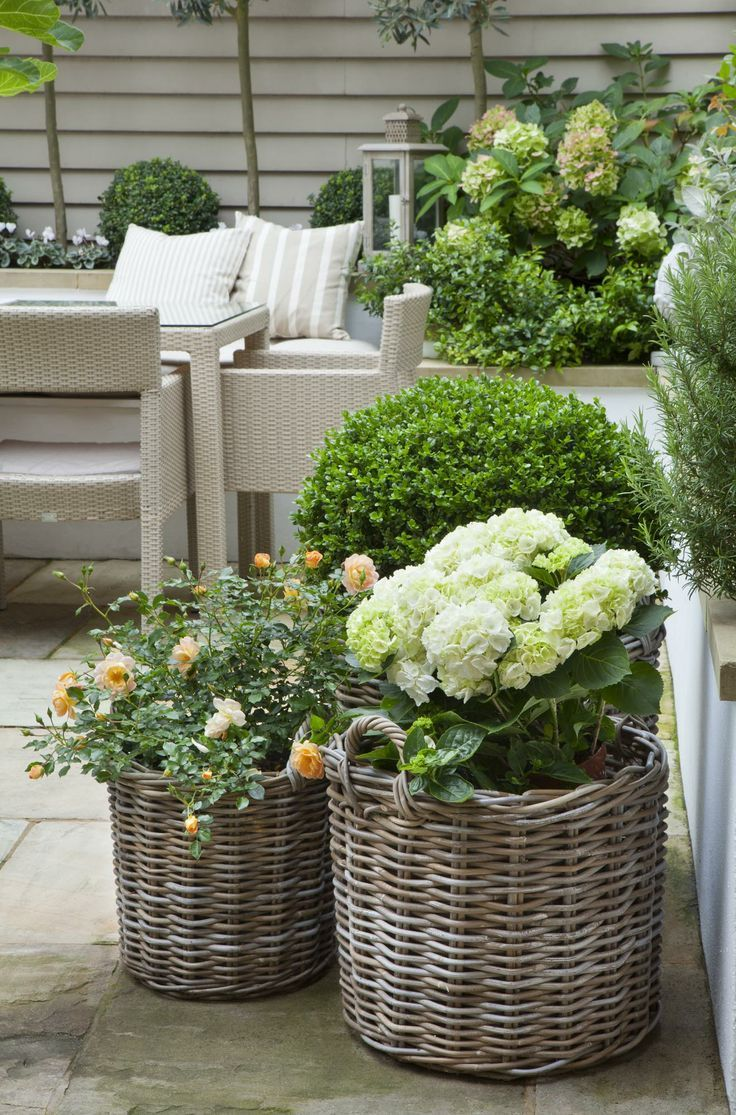 Pretty addition to a patio -Hydrangea, roses, and boxwood in round grey rattan baskets