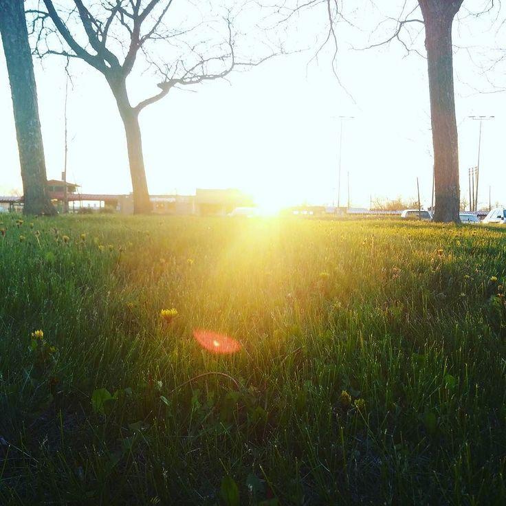 Beauty all around. #Sunshine