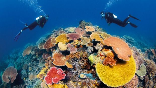 "The federal government spent more than $400,000 sending Environment Minister Greg Hunt and senior public servants on a flurry of overseas lobbying trips to avoid an embarrassing ""in danger"" listing for the Great Barrier Reef."