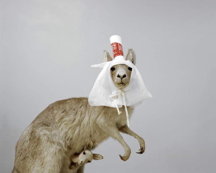 Kangaroo (Macropodidae) A Moveable Beast series by Helge Skodvin