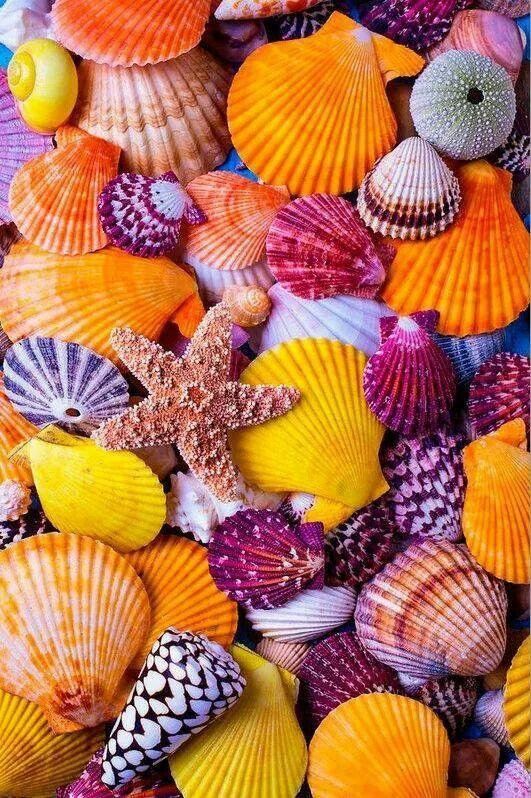Beautiful seashells all colors