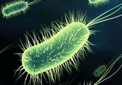 Éliminez les bactéries de l'estomac, et traitez les maladies intestinales et les hémorroïdes avec ce remède naturel puissant! Les infections intestinales