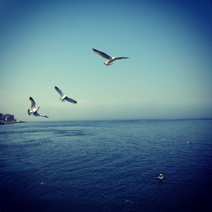 #bird #seagull #sea #istanbul #sky