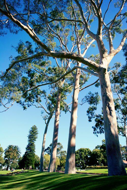 King's Park, Perth, Australia. Travel Photography  www.sallyburford.com