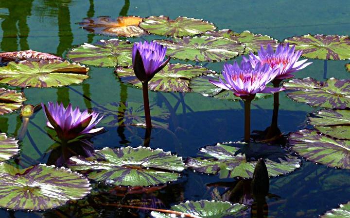 25 best ideas about coy pond on pinterest koi ponds for Big fish ponds for sale