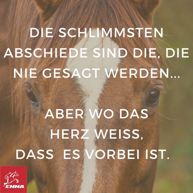 Besten  Pferde Reiten Ideen Auf Pinterest Zitate
