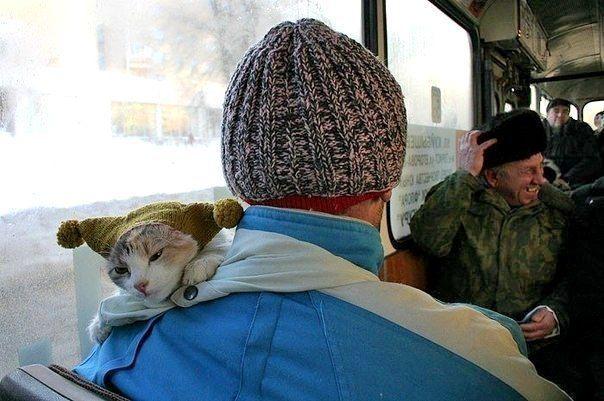 #cat #cats #catsofinstagram #instacat #instagramanet # ...