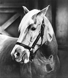 Bamboo Harvester (1949–1970) was the name of the Palomino horse that portrayed Mister Ed on the 1961–1966 comedy series of the same name. Foaled in 1949, the gelding was trained by Will Rogers' protégé, Les Hilton. He was born in the Los Angeles area but sources disagree as to whether his birthplace was in El Monte[1] or at Harvester Farms in Chatsworth, California.[2][3]  In 1968, two years after the cancellation of Mister Ed, at the age of 19, Bamboo began to suffer from a variety of age…