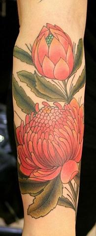 waratah (telopea) tattoo, open and in bud