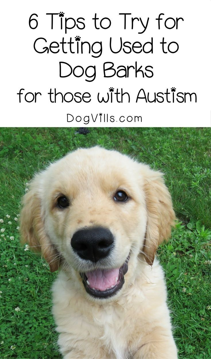 Dogs have great benefits when it comes to autism, but their bark can be overwhelming. Try these 6 tips to help your autistic loved one get used to it.