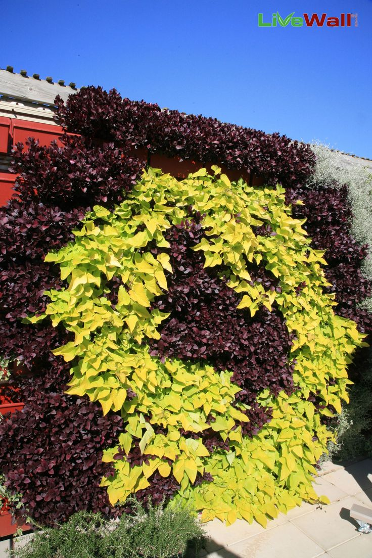 58 best Living Walls images on Pinterest | Living walls, Green walls ...