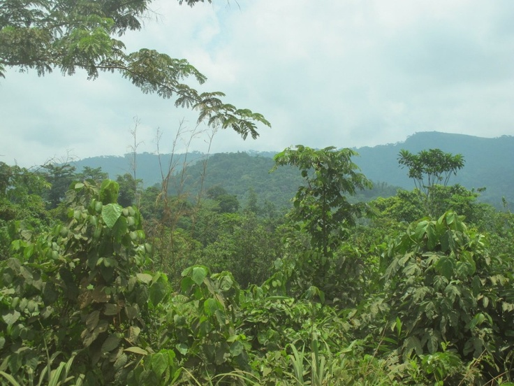 INCREDIBLE MOUNTAINS: The Nimba Mountains in northeastern Liberia are shared with Ivory Coast and Guinea. They're home to incredible biodiversity, including numerous species found nowhere else on Earth. And they're rich in resources that are helping the Liberian people thrive. (© Conservation International/photo by Heidi Ruffler)
