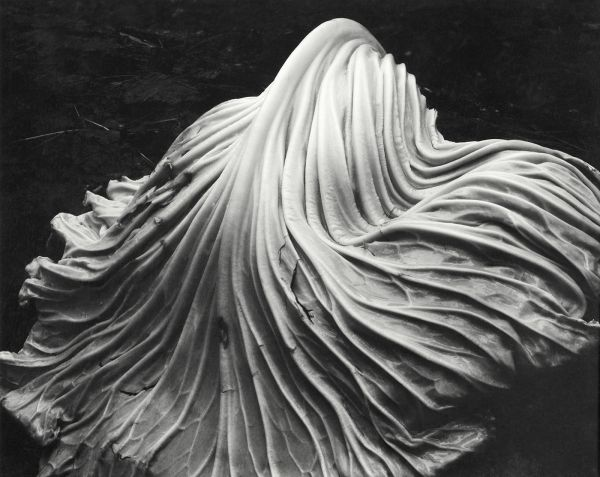 Edward Weston's The Flame of Recognition - Aperture Foundation NY - Aperture Foundation NY