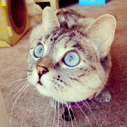 Eyes Of A Blue Dog Critical Analysis